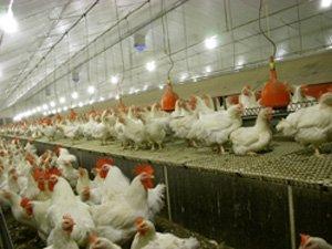 Coatingvloeren voor de pluimveehouderij